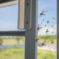 moskitiery i siatki na okna skuteczne sposoby na komary