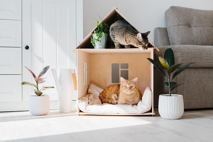 Dom dla kota