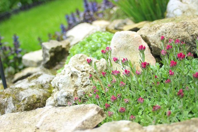 głazy skalne na skalniaku z kwiatami