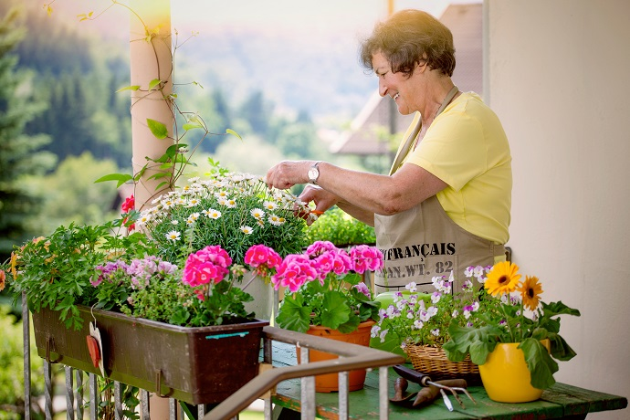 Najlepsze Kwiaty Na Balkon Sprawdź Jakie Rośliny Sprawdzą