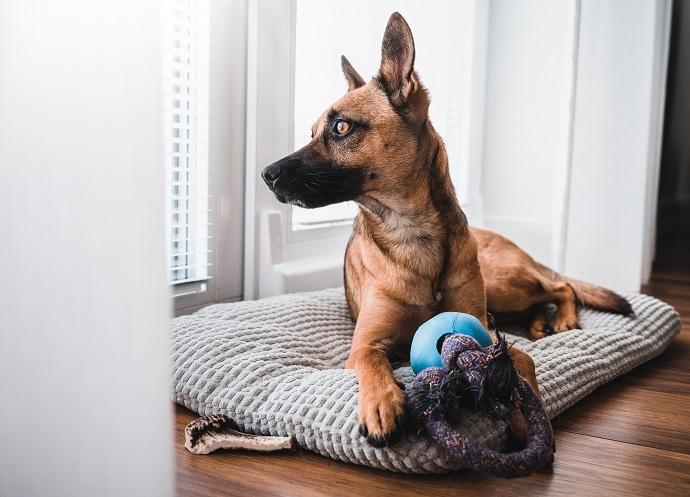 poduszka dla psa w domu